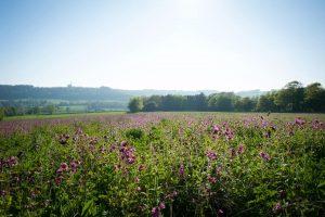 Cissbury Sussex